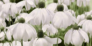 Blumenwiese  sur Violetta Honkisz