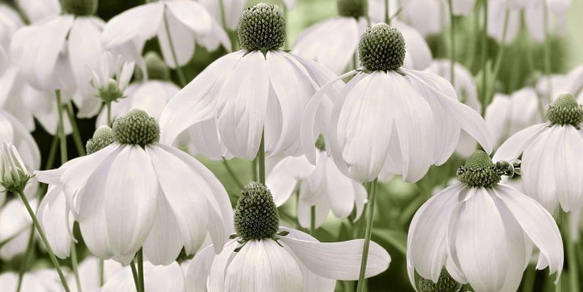 Blumenwiese  van Violetta Honkisz