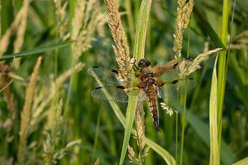 Libelle in Ruhe von Rianne Fotografeert