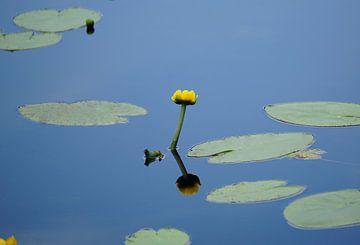 Gele bloem in een meertje van Dominic Corbeau