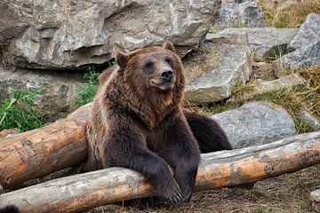 Der glückliche Bär von Alia Maximus