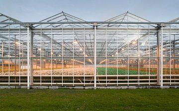 Glastuinbouw van Daan Overkleeft