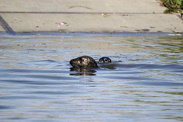Zeehond met jong / pup 5 van Leon Verra