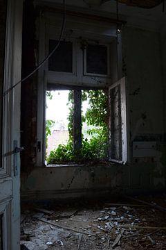 Window van Dimitri Declercq