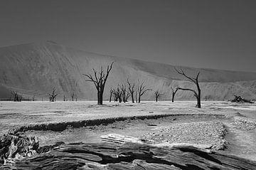 dode vallei in Namibie ( Death Vlei ) von Linda Manzaneque