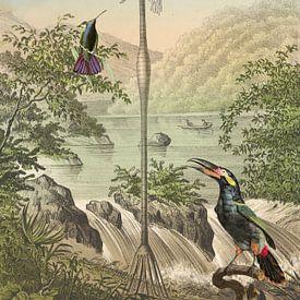 Tropenparadies und Vögel von Andrea Haase