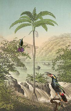 Tropenparadies und Vögel