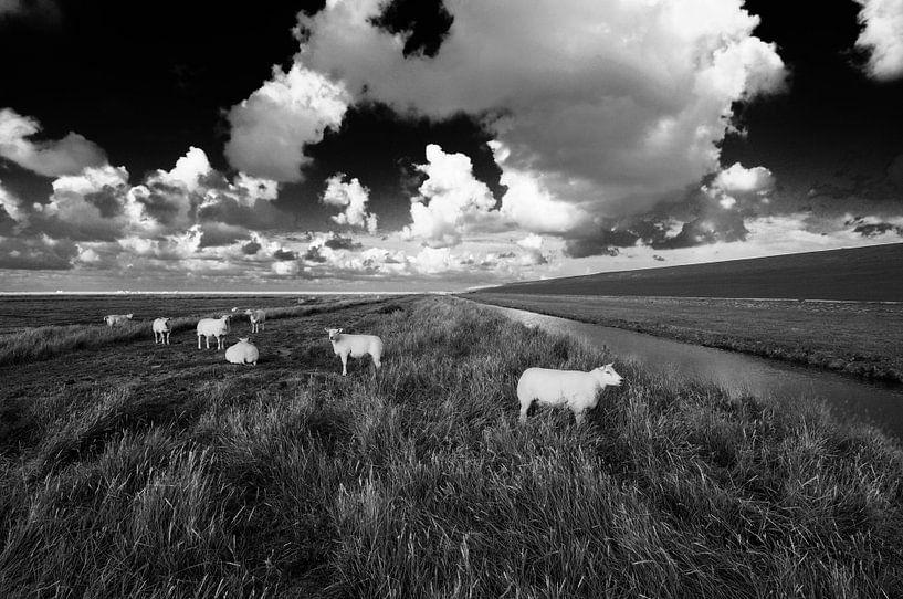 White sheep van Martijn Schornagel