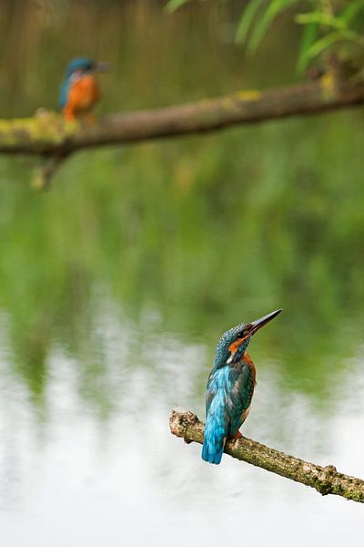 IJsvogels van Miranda Bos