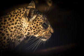 Leopard Portrait van Thomas Froemmel