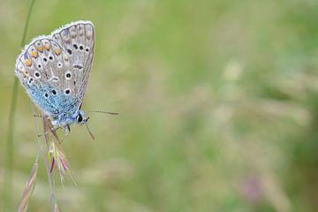Vlinder Butterfly von Patricia van Nes