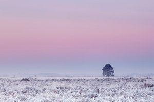 Boom onder roze winterlucht van
