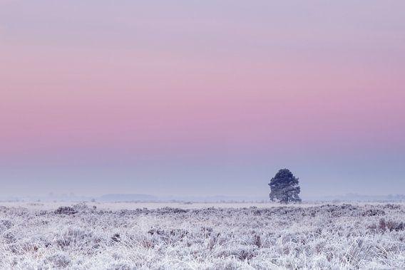 Boom onder roze winterlucht