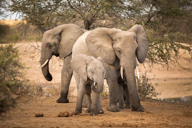 Elephant Family van Thomas Froemmel