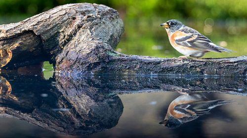 Weerspiegeling van een keep op een boomtak in het water