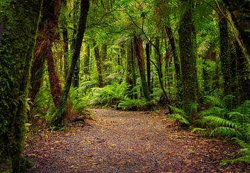 Breed bospad op het Zuidereiland van Nieuw Zeeland van Rietje Bulthuis