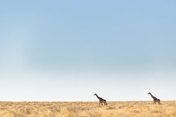 Giraffen in leeg landschap, Afrika van Simone Janssen