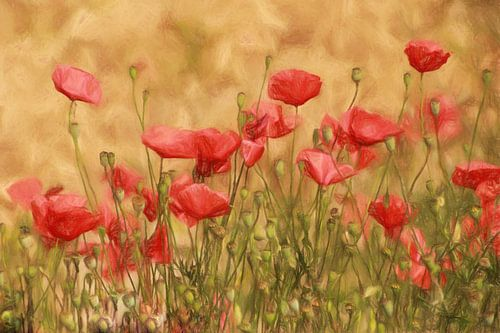 poppy field van Yvonne Blokland