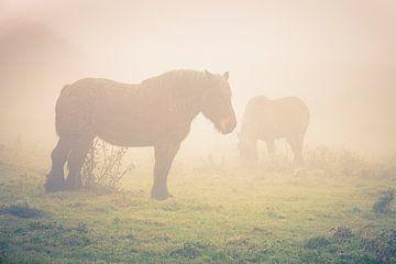 Paarden in de mist van Marcel Bakker