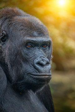 Gorilla zonsondergang von Ron Meijer Photo-Art