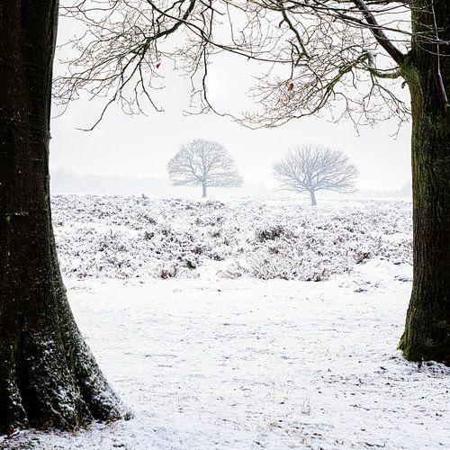 Winter tree's von