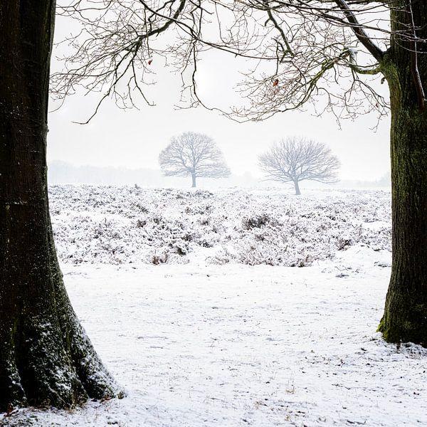 Winter tree's van Richard Guijt