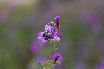 Biene sitzt auf Blume von Sabine DG