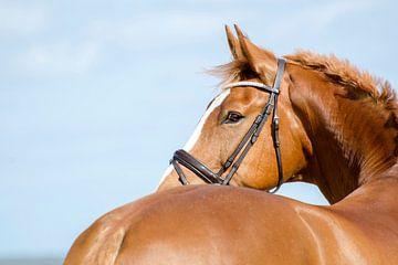 Paard aan zee van Lonneke Prins