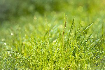 Grünes Gras von Jeroen Mikkers