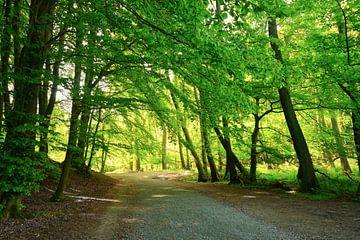 Blätterdach im Mai von Ostsee Bilder