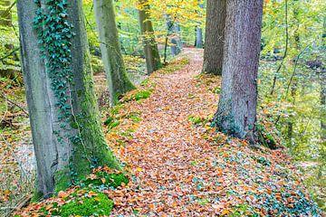 Landschap met bomen en bladeren in Nederlands bos van Ben Schonewille