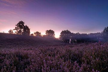 Prachtige zonsopkomst op de Mechelse heide in belgie, tijdens de bloei van de paarse heide van Debbie Kanders