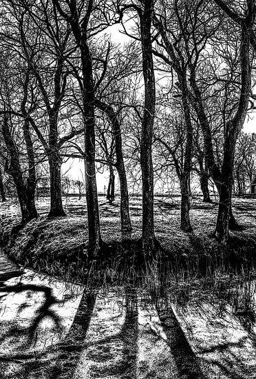 Bomen maar geen bos