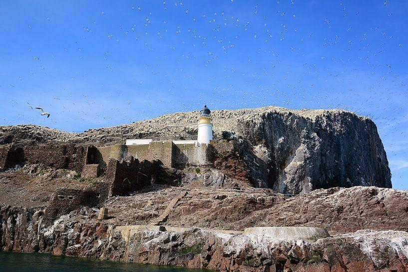 Northern Gannets on Bass Rock van Gisela Scheffbuch