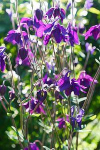 Welt der Blumen van