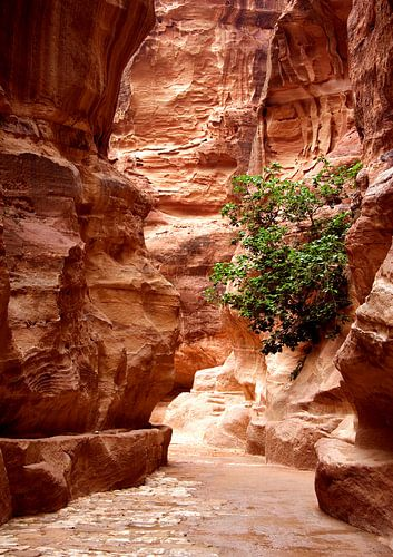Kloof naar Petra, Jordanie van