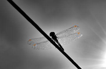 Libelle schwarz und weiß von Marlou Dekker