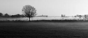 Mistig landschap Oud-Zevenaar van Alina van Lierop