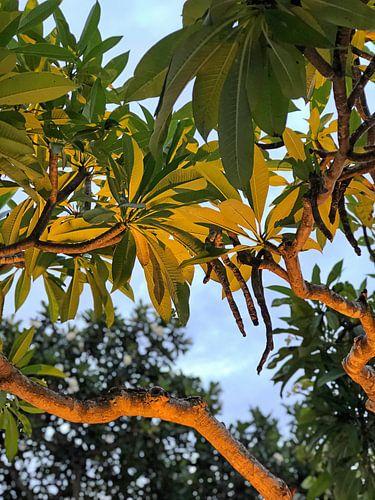 Aangelichte bomen bij hotel op Bali