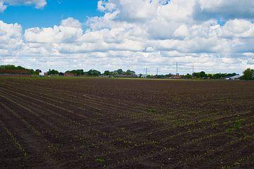Het begin van een maisveld van JM de Jong-Jansen