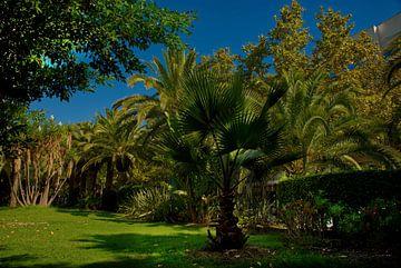 Ein Park mit Palmen und blauem Himmel in Spanien. von Edith van Aken