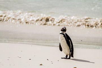 Penguin sur Jan van Kemenade