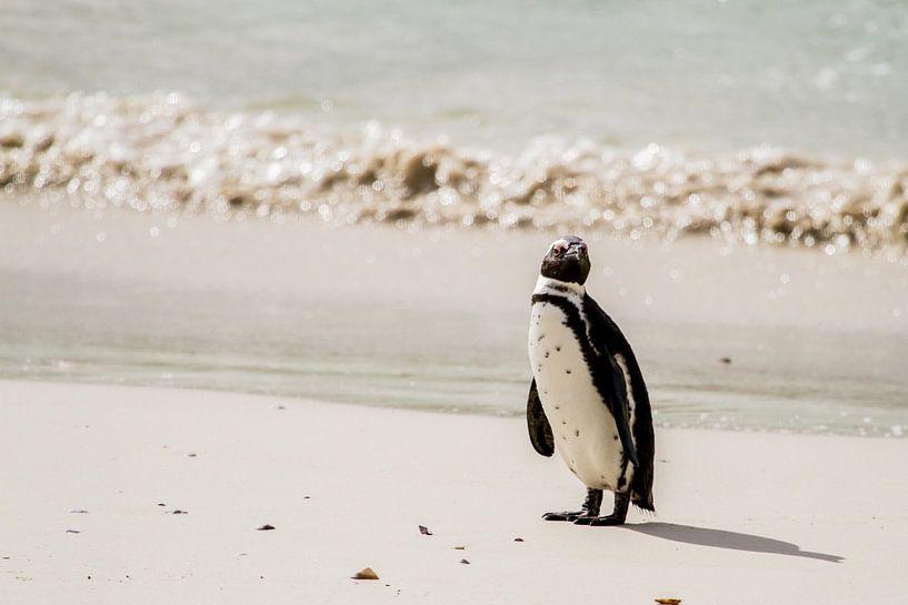Pinguin van Jan van Kemenade