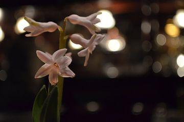 Zarte Blüten mit Bokeh von zwergl 0611