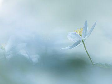 Heavenly Blue van Jacqueline Heemskerk
