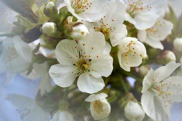 Frühlingsblüte von Ad Jekel