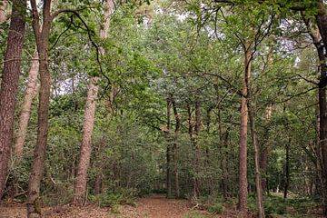 Typische Nederlandse bossen van Angela Kiemeneij