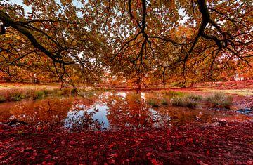 Lac automnal couvert de feuilles rouges sur Gea Gaetani d'Aragona