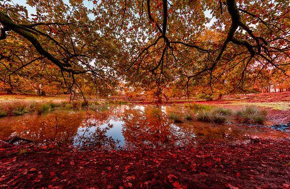 Herfstmeer dat door rode bladeren wordt behandeld