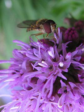Insect op een bloem van Janita Bijlsma